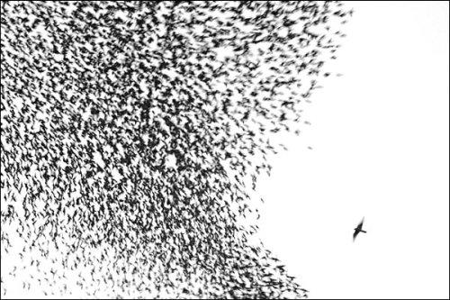 Sky Chase by Manuel Presti